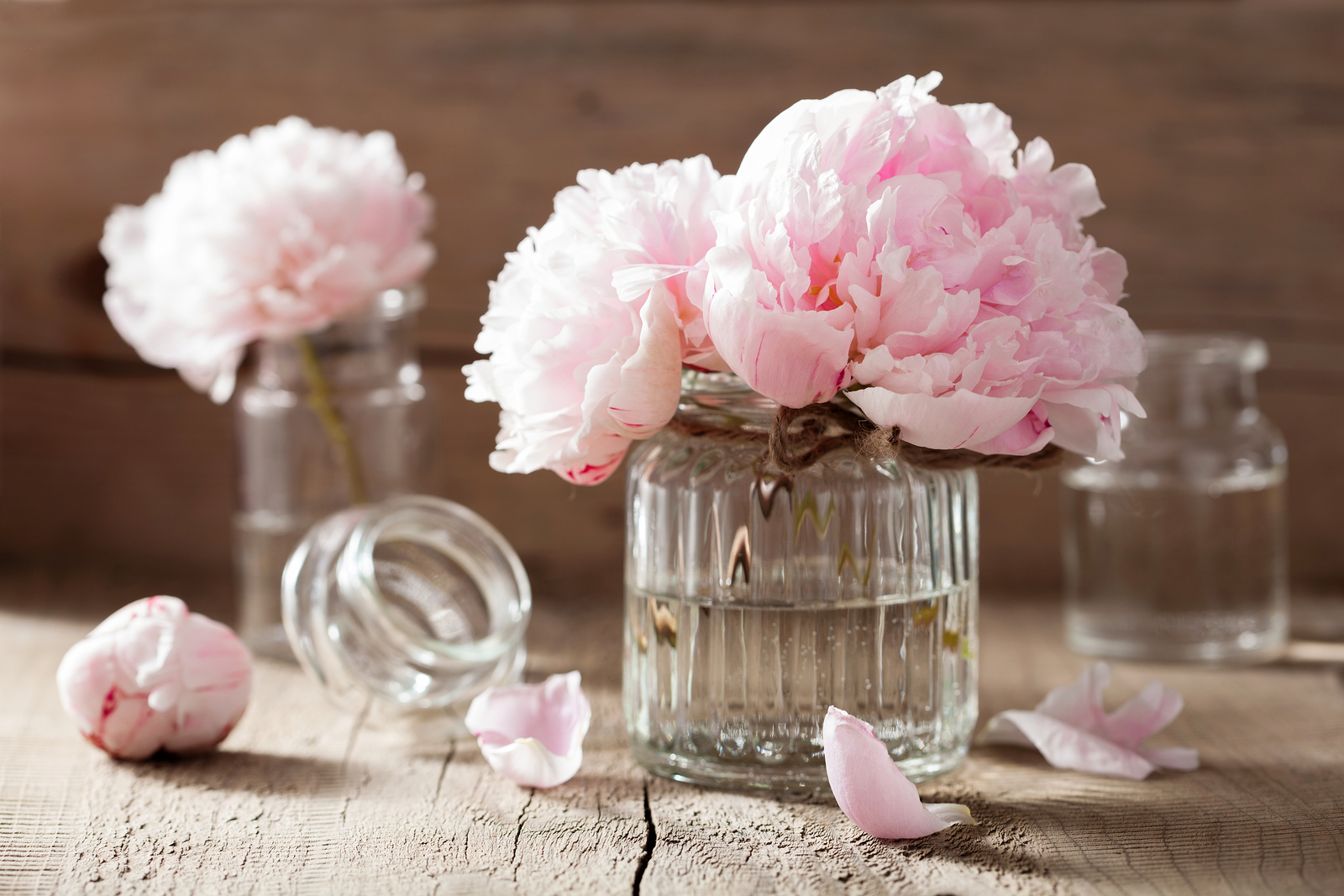 Unique Flowers To Send For Special Occasions